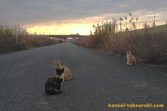 淀川の野良猫