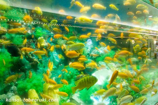 阪急3番街の水族館