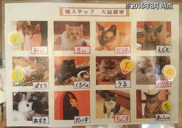 猫の箱 猫スタッフ(2016.8)