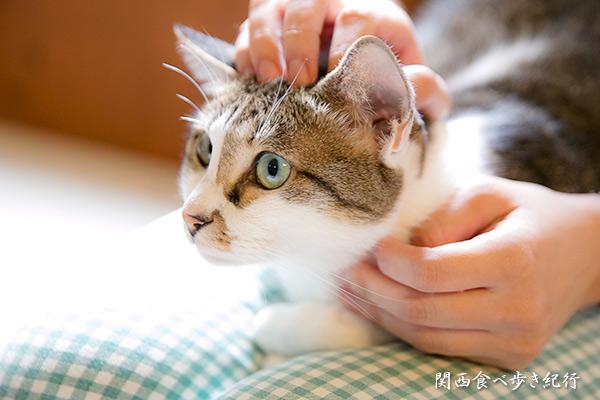 猫の箱のねこ「みぃ」