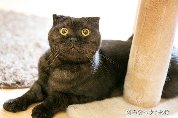 猫の箱のねこ「くろべえ」