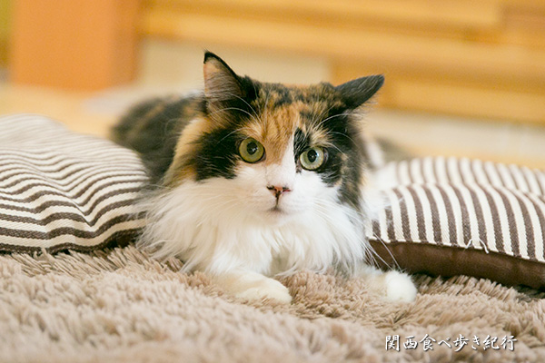 猫の箱のねこ「めりあ」