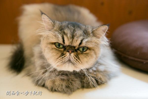 猫の箱のねこ「ウル」