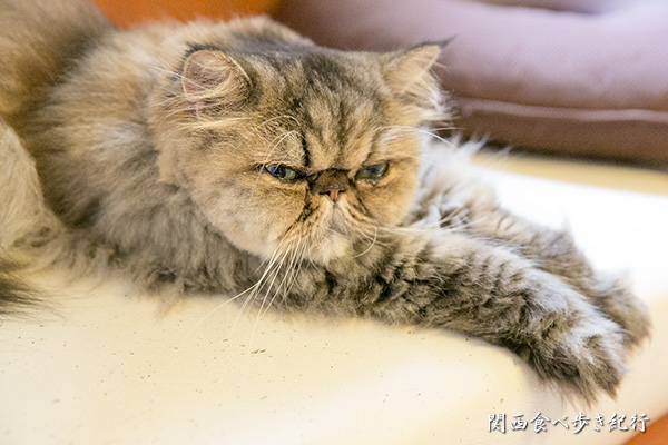 猫の箱のねこ「うる」